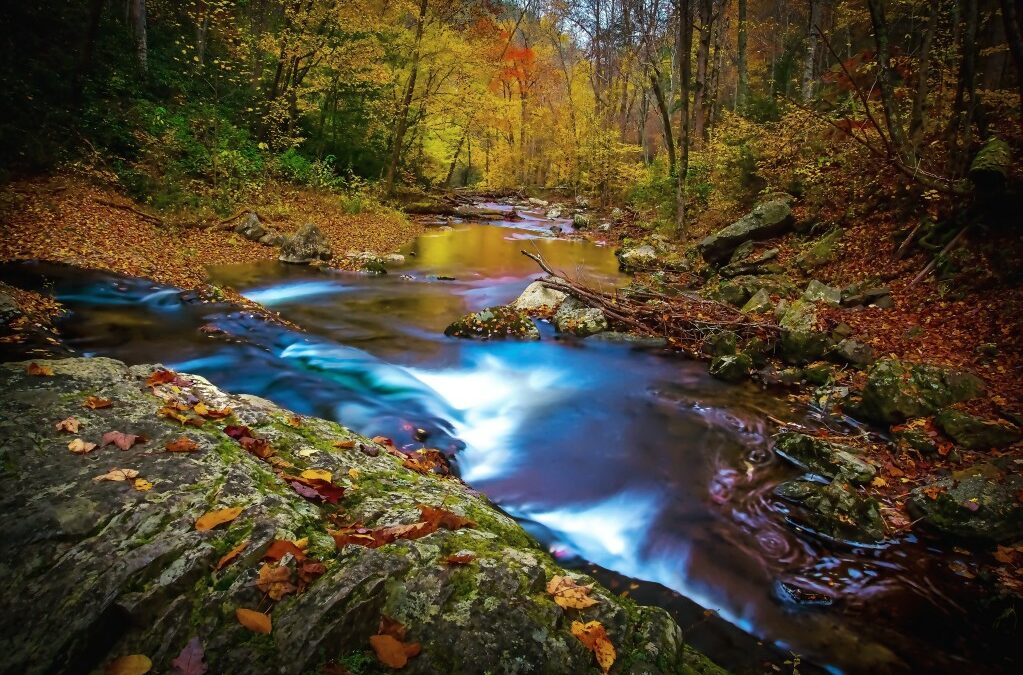 creek in the great smoky mountains during the fall