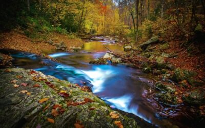 9 Great Hikes to See Peak Colors in the Smokies All Through Fall